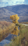 Reflections in the Owens Valley